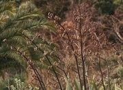 31st May 2016 - Autumn flax