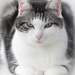 Casper by leonbuys83