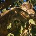 catch the sun by koalagardens
