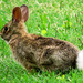 There Goes Peter Cottontail . . . by milaniet