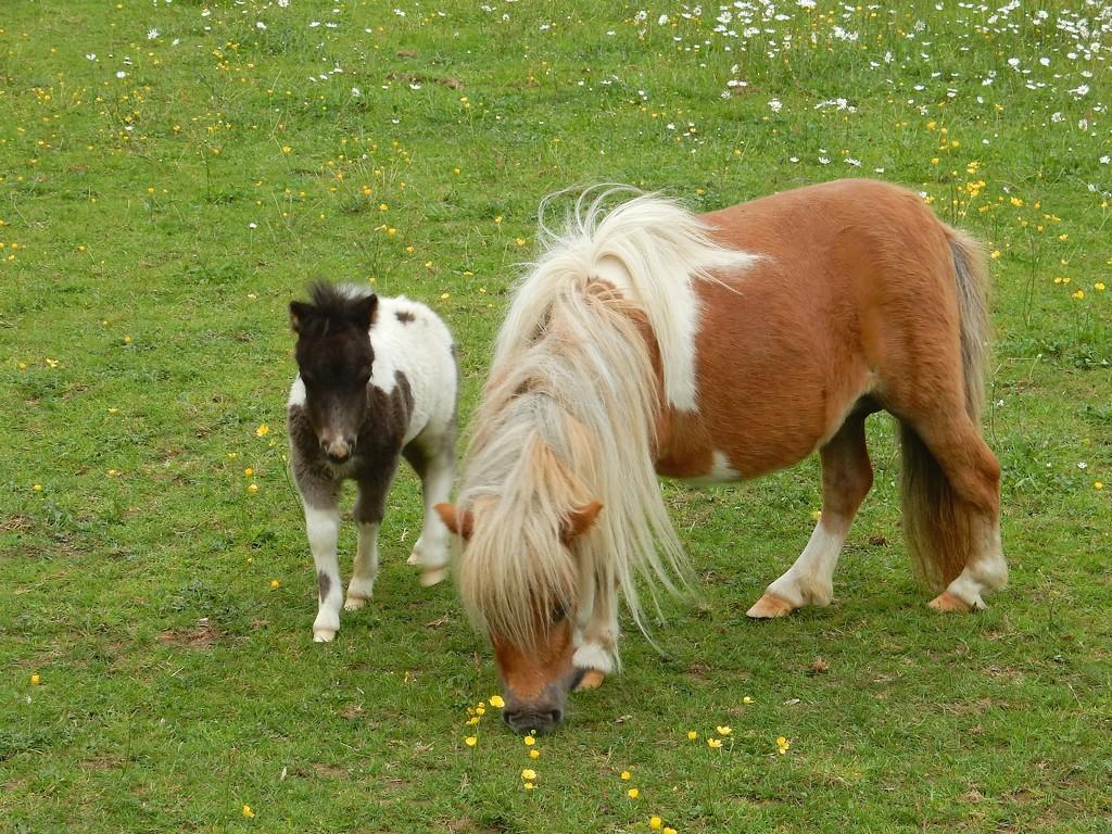 My Little Little Pony by bulldog