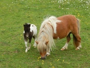 2nd Jun 2016 - My Little Little Pony