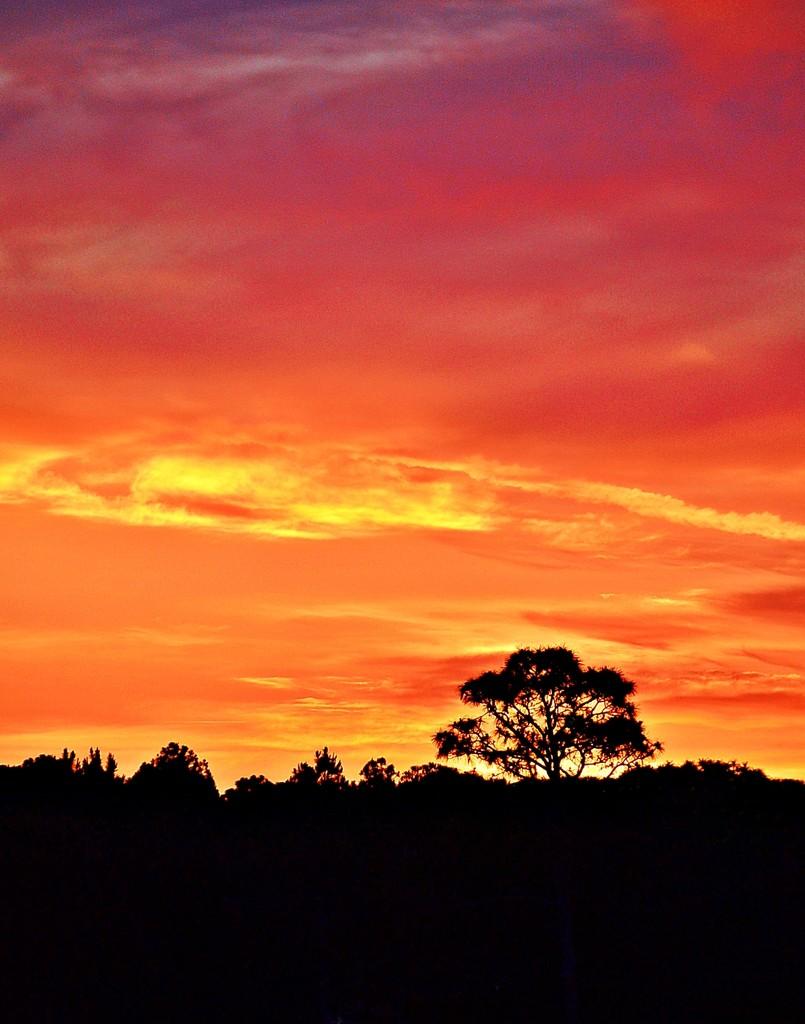 Orange Sunshine Swirl  by soboy5