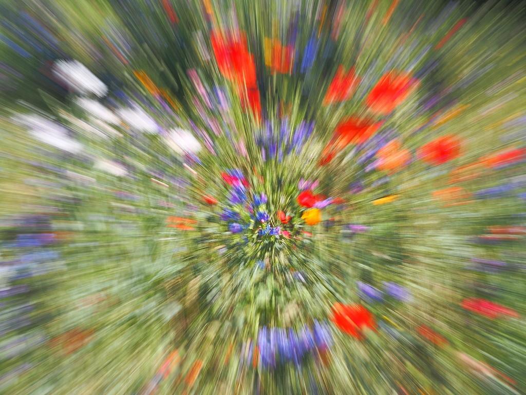 Zoom burst SOOC by laroque