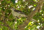 27th May 2016 - Protecting the nest