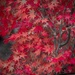 Red Autumn by pusspup