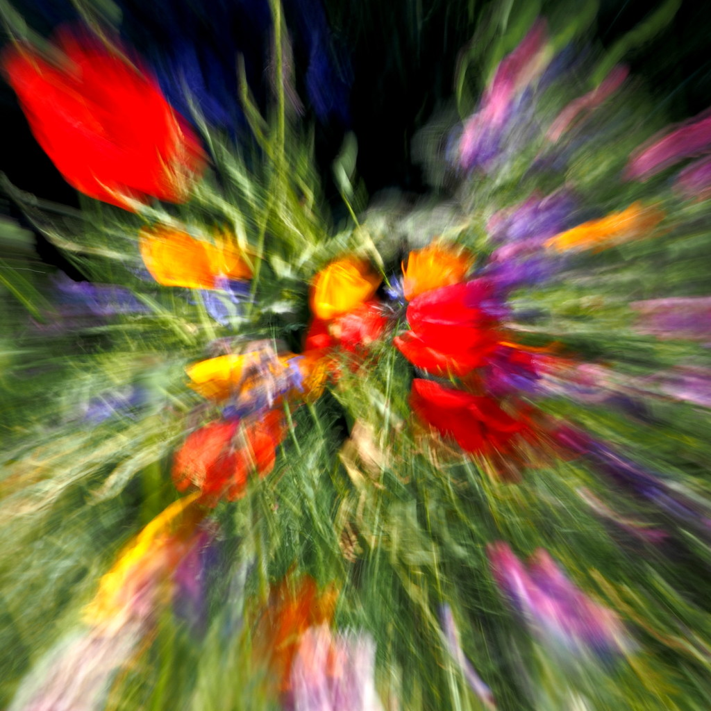 Zoom burst cropped square by laroque