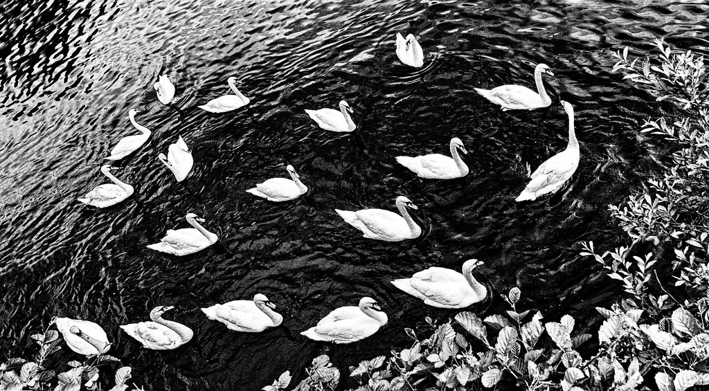 Swanee River by lupus