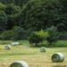 Hay Bales Water Colour