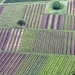 Patchwork Grapevines! by cmp