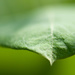 leaf macro by dianen