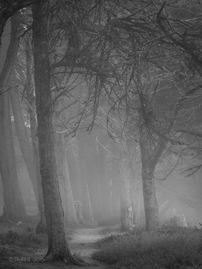 And The Fog Rolls In, In BnW by elatedpixie