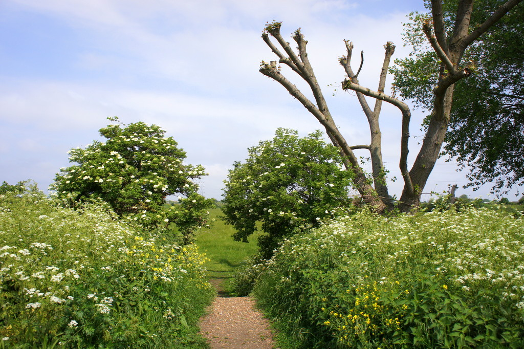 Path through the marshes by boxplayer