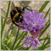 8th Jun 2016 - Collecting Nectar