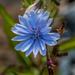 Wild Blooms by joansmor