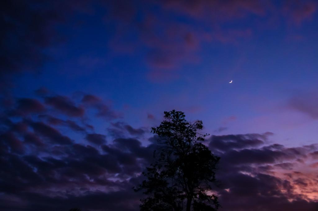 Twilight by danette