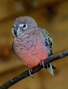 9th Jun 2016 - Twycross Bird