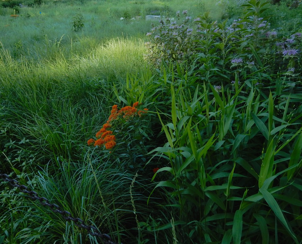 A little slice of meadow by mcsiegle