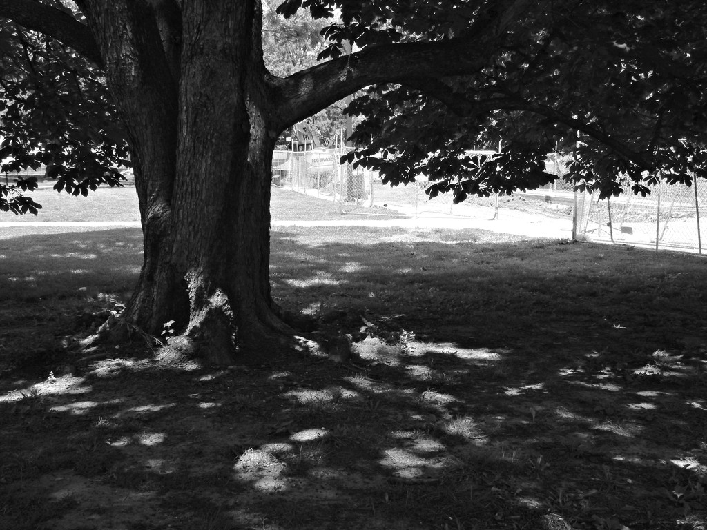Under a spreading [horse] chestnut tree by mcsiegle
