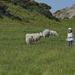 LITTLE SHEPHERDESS by markp