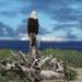 Bald eagle on Klipsan Beach by teiko