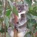 freeze-frame by koalagardens