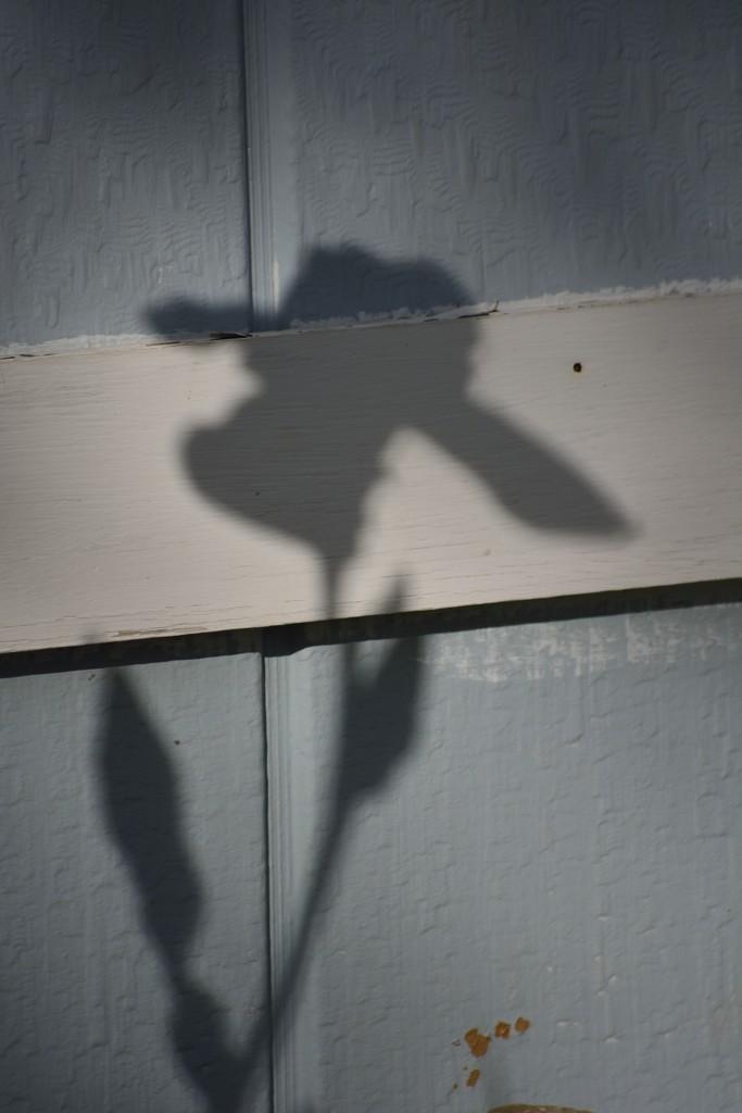 Shadow by debrac