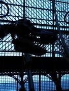12th Jun 2016 - Skeleton of roof & t-rex