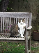 6th Feb 2010 - Tabby, my 25# Fat Cat