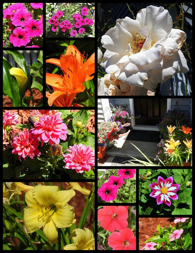 My neighbor's pretty flowers by homeschoolmom