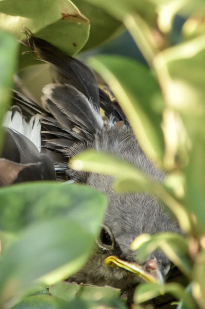 Hide and seek by danette