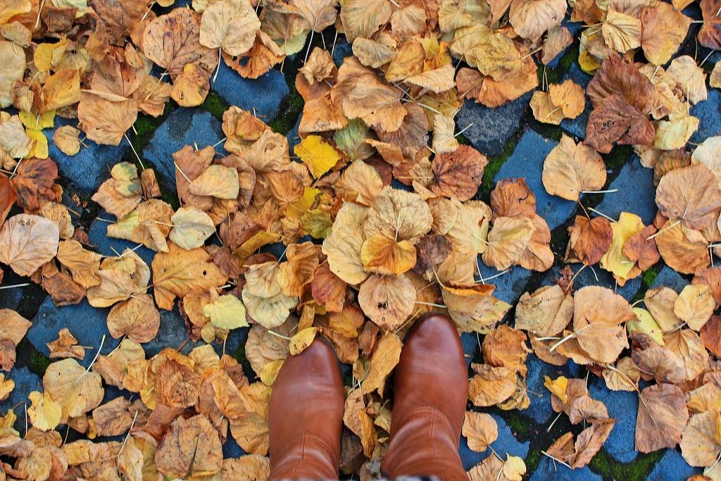 Autumn Leaves by leggzy