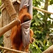 Such fun in the Orangutan House  by bizziebeeme