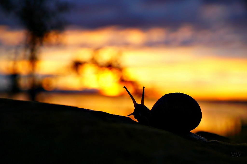 2016-06-15 slow down (enjoying sunset with a friend l (snail)) by mona65