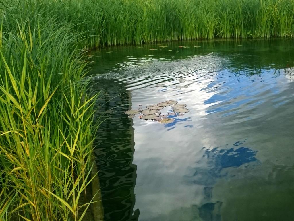 Pond by boxplayer