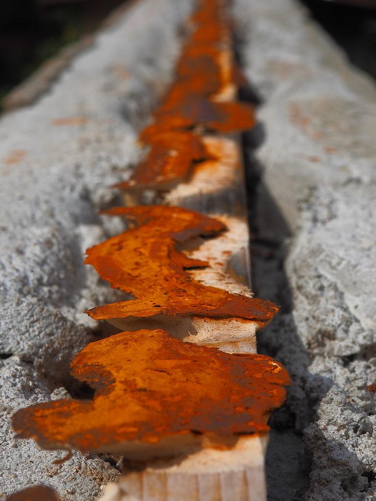 Artfully rusty by laroque