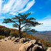 Lone Tree by joansmor