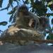 Pretty Mist by koalagardens