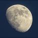 Moon Shot on June 15th by olivetreeann