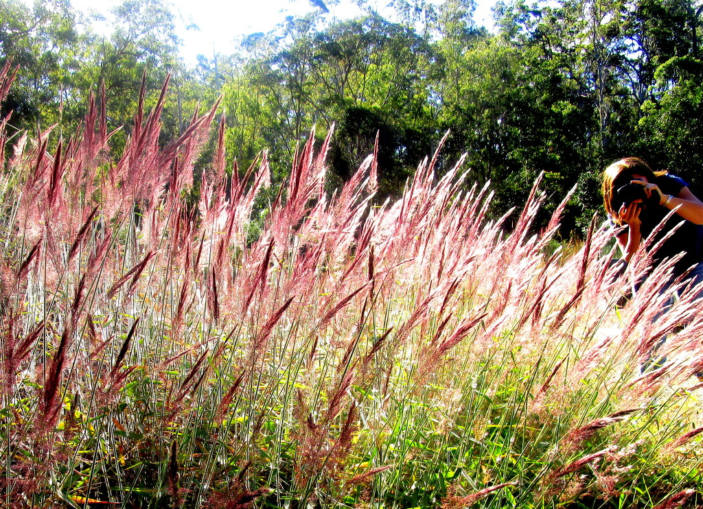 Gorgeous roadside grasses. by 777margo