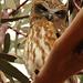 Owl by leestevo