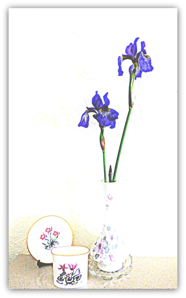 Iris by beryl