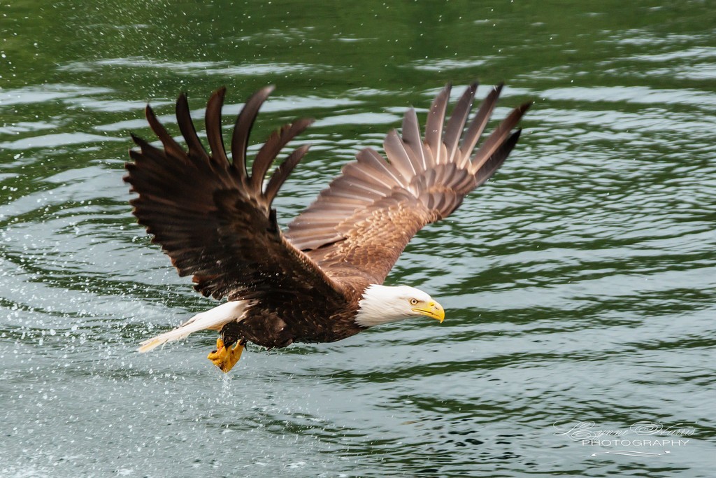 Regal Bird by lynne5477