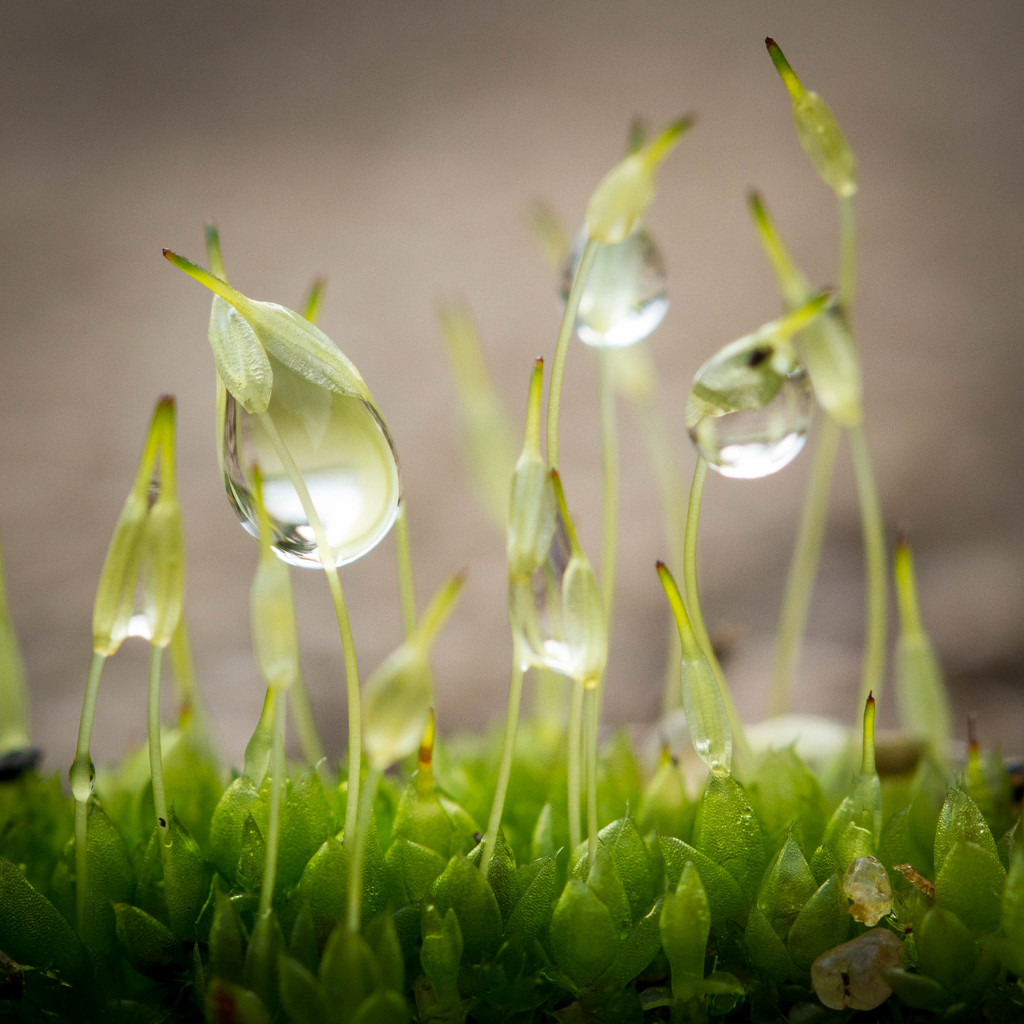 Moss and drops by jodies