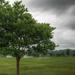Tree 2 in June