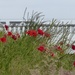 Poppies, Daisies and Southwold Pier by susiemc