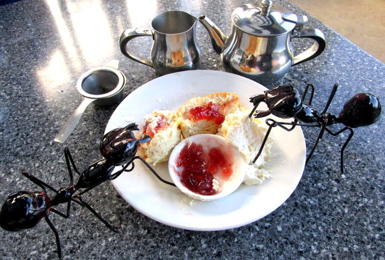 Scones, jam & cream!! Yummy. by 777margo