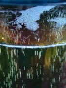 21st Jun 2016 - Suffolk cyder bubbles