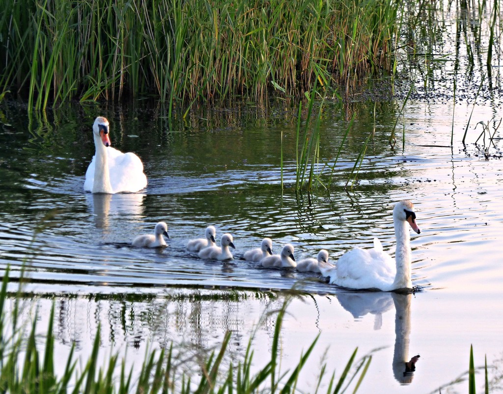 Family outing by julienne1
