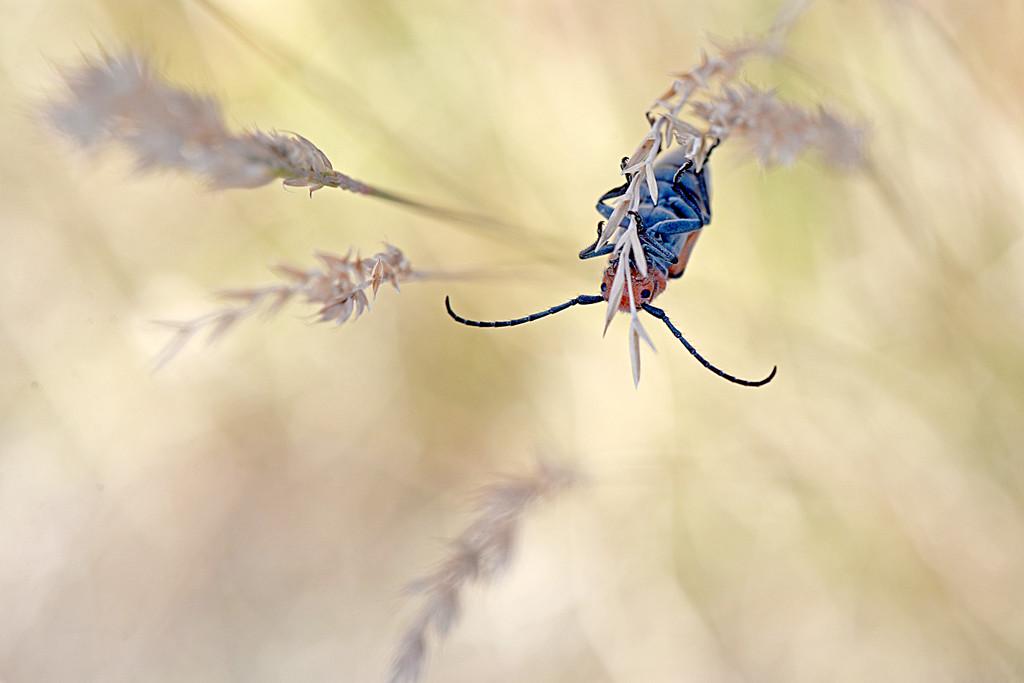 Milkweed bug hanging on! by fayefaye